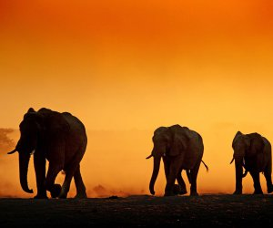 Pressebild_Namibia_Botswana_-_Elefanten_RolandMarske