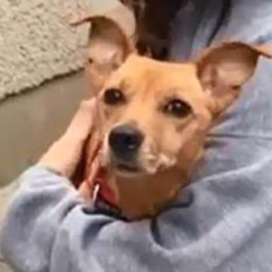 hund mischling