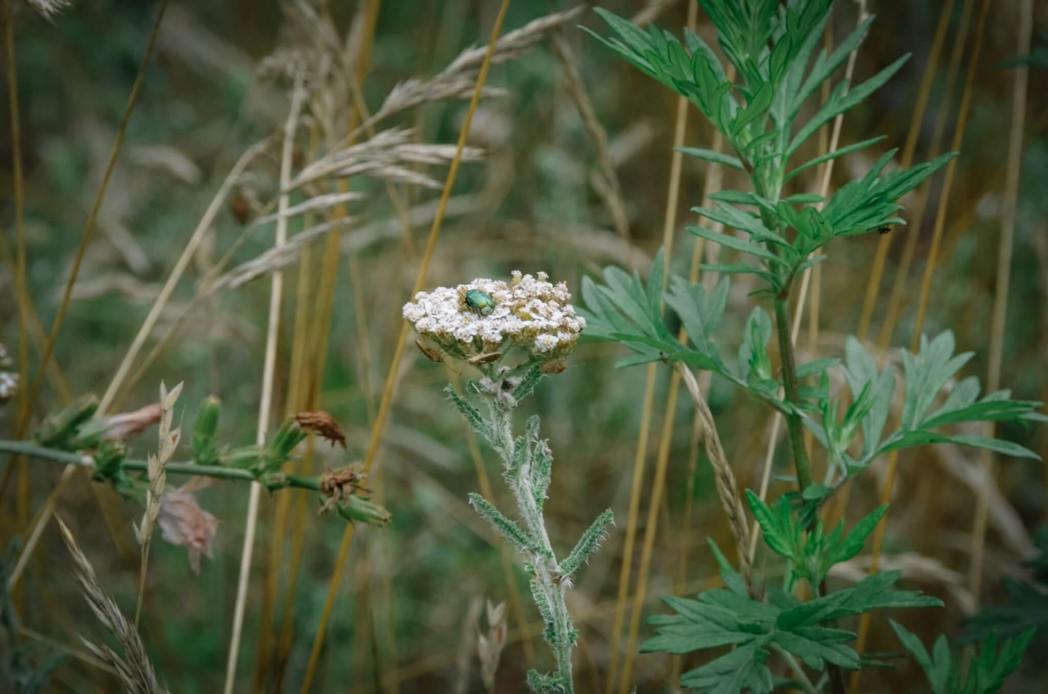 Insektenhotel-31