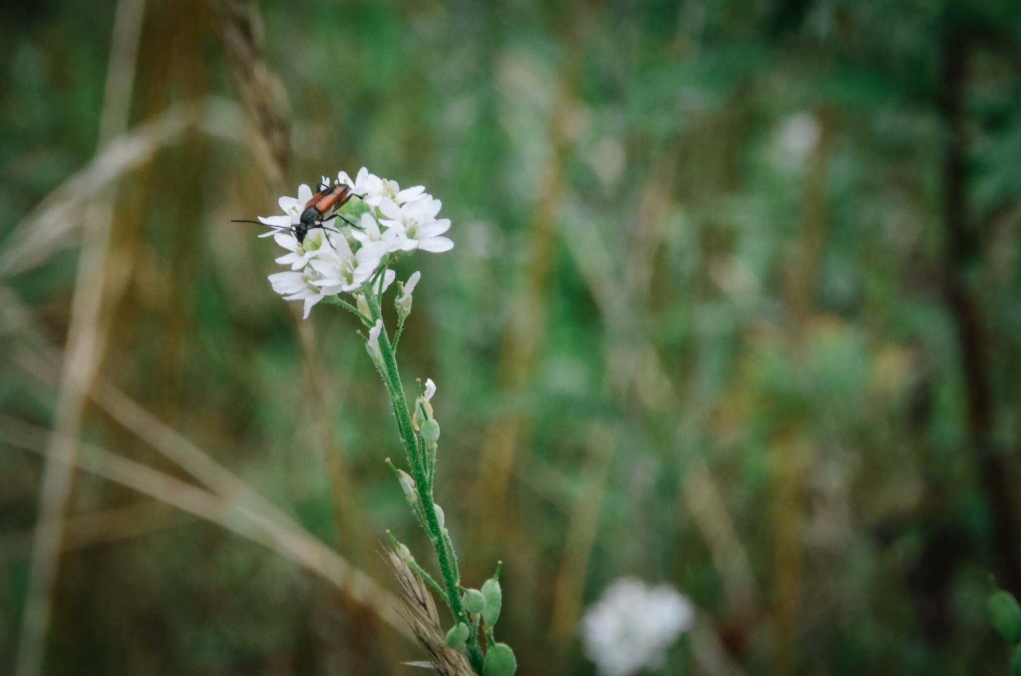 Insektenhotel-34